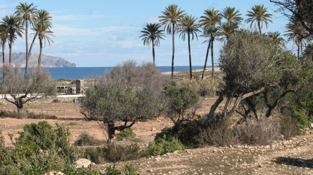 Palmbomen zee