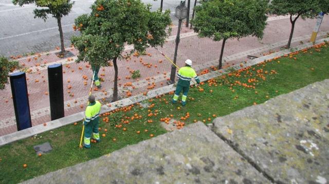 appelsienen
