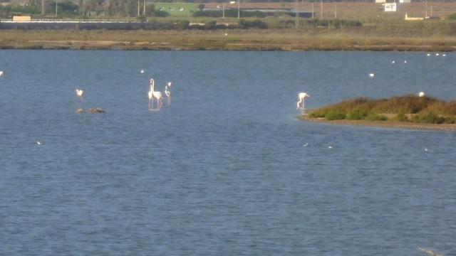 Na de afdaling van Cabo De Gata kom je langs de salinas. Je kunt er vanuit kijkhutten roze flamingo's gadeslaan.