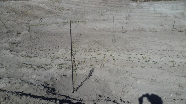 Het gaat om duizenden boompjes die allemaal toch water moeten krijgen.