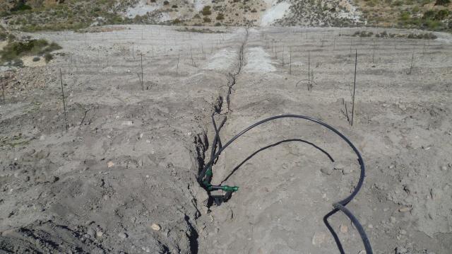 We zien tot onze verrassing dat men begonnen is met de aanplanting van een olijfgaard. Ongelofelijk dat men dat daar doet.
