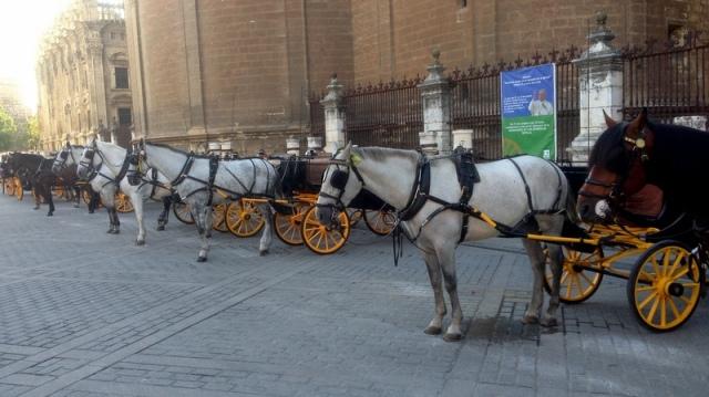 Deze koetsjes staan te wachten op klanten aan de kathedraal. In de semana santa en de feria de abril kort nadien zal het allicht wel drukker zijn. De officiële prijzen liggen in die periode alvast een stuk hoger.